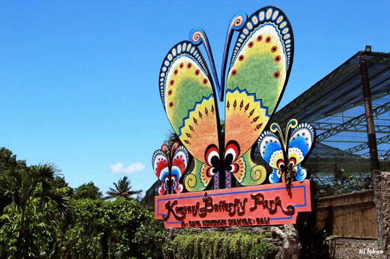 Learn About The Butterflies At Kemenuh Butterfly Park